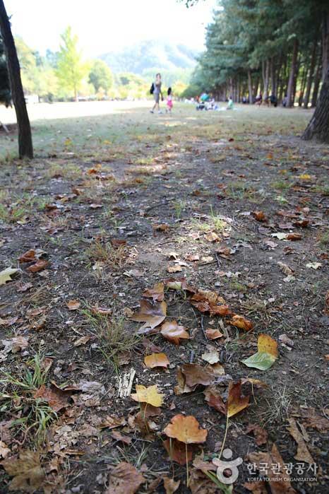낙엽이 뒹구는 가을이 됐다