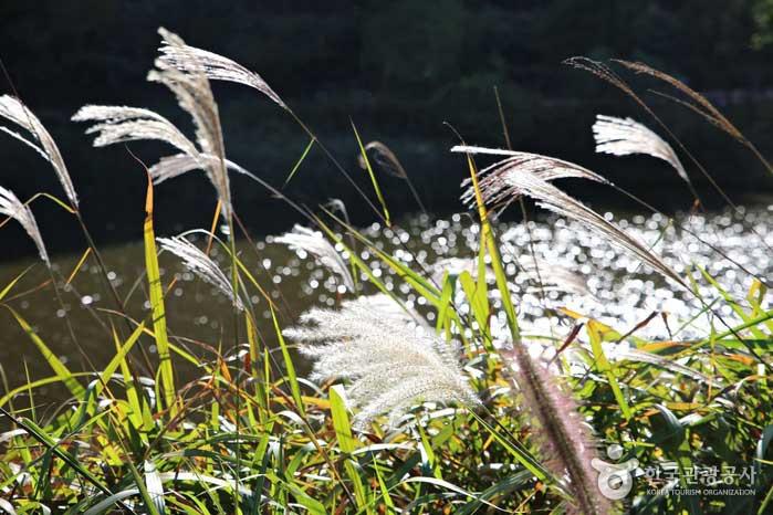 생태연못 주위의 물억새가 운치를 더한다