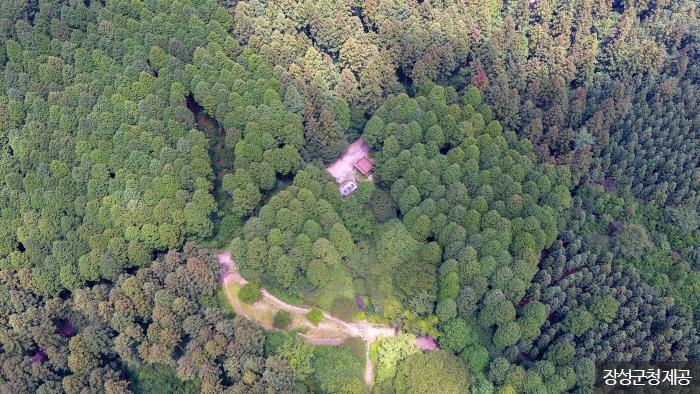 하늘에서 본 편백나무 군락 <사진제공: 장성군청 >
