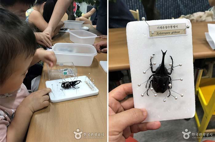 곤충표본만들기체험