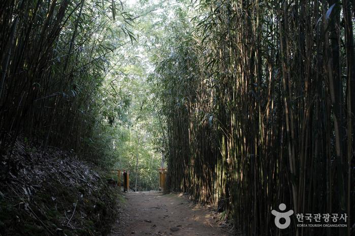 송광사에서 불일암 가는 길에 만나는 대숲