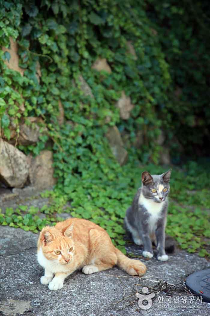 애도에서 만난 고양이들
