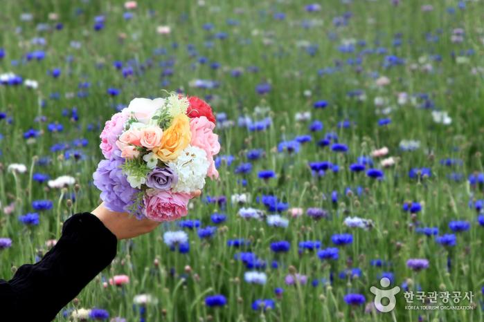 6천만송이 꽃과 함께 두근두근 데이트