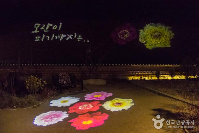 밤이 되면 조명이 들어와 몽환적인 분위기를 연출하는 세계모란공원