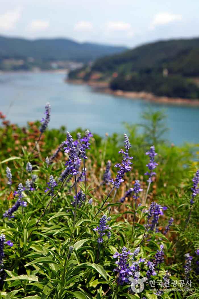 300여 종의 꽃들이 사시사철 피고 지는 별정원