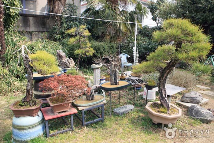 분재와 수석을 감상할 수 있는 선학곰탕 정원