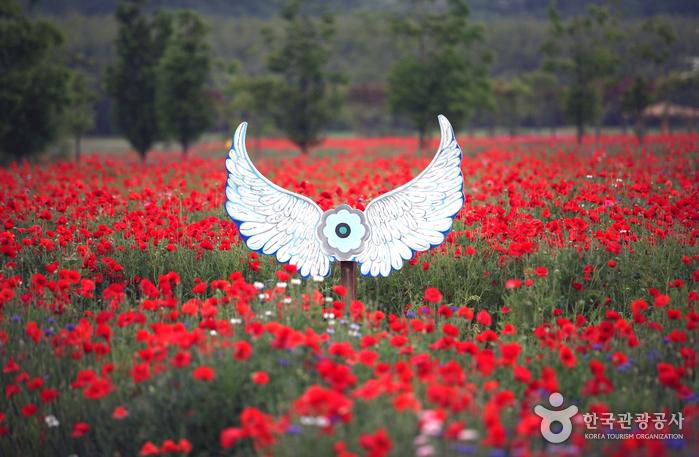 꽃밭에 마련된 예쁜 포토존