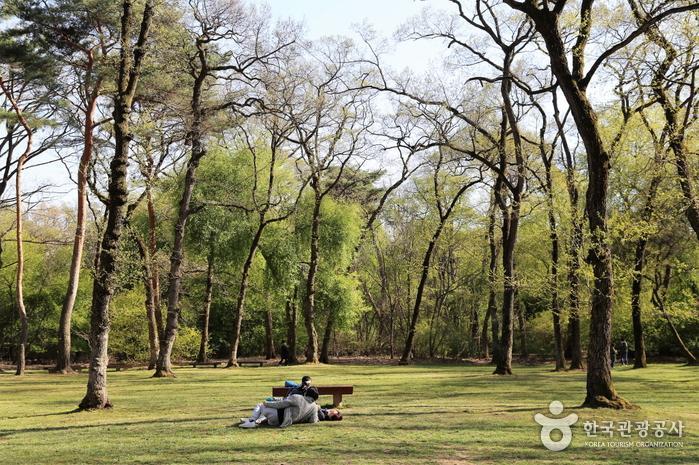 융‧건릉 숲과 너른 잔디