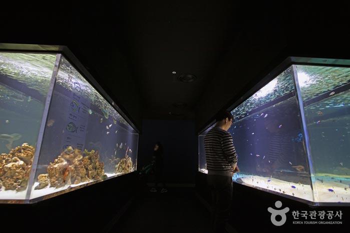 기다란 수조에 담긴 바다 생태계