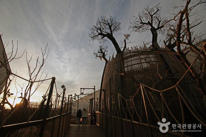 바오밥나무들 사이로 나무 데크가 나 있다