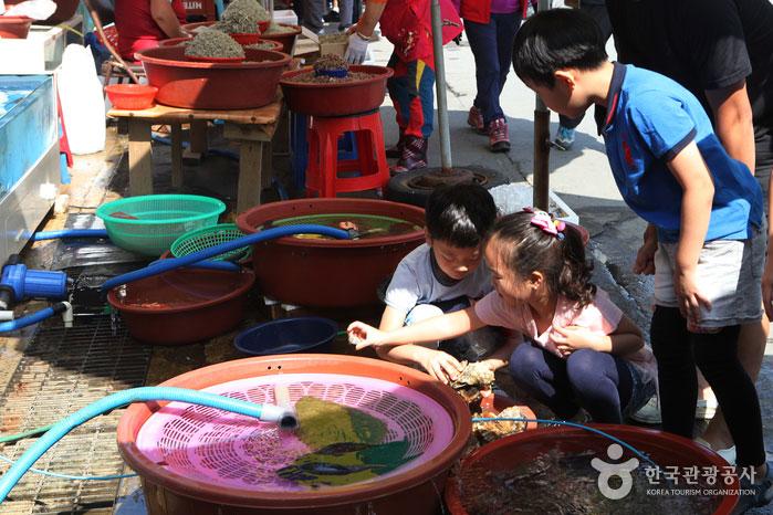홍원항 자연산전어․꽃게 축제장 전경