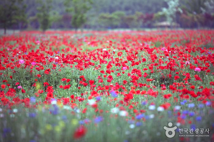 온 천지가 꽃밭으로 변신하는 5월의 태화강