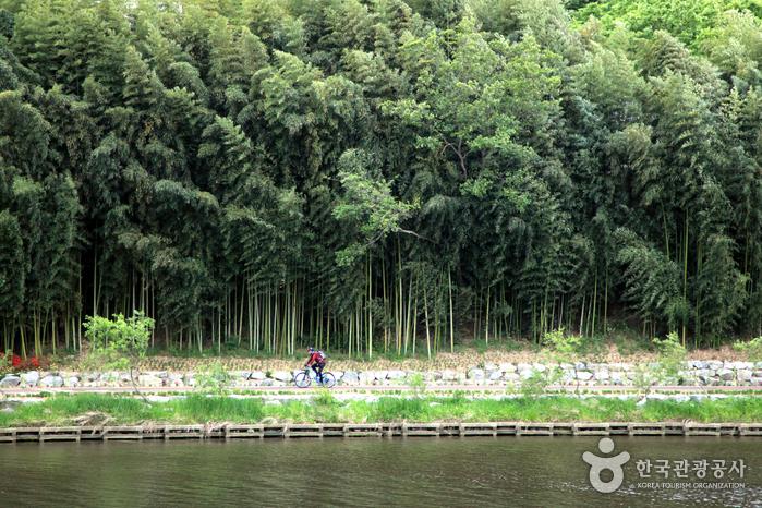 빼곡한 대숲이 십 리나 이어지는 십리대숲