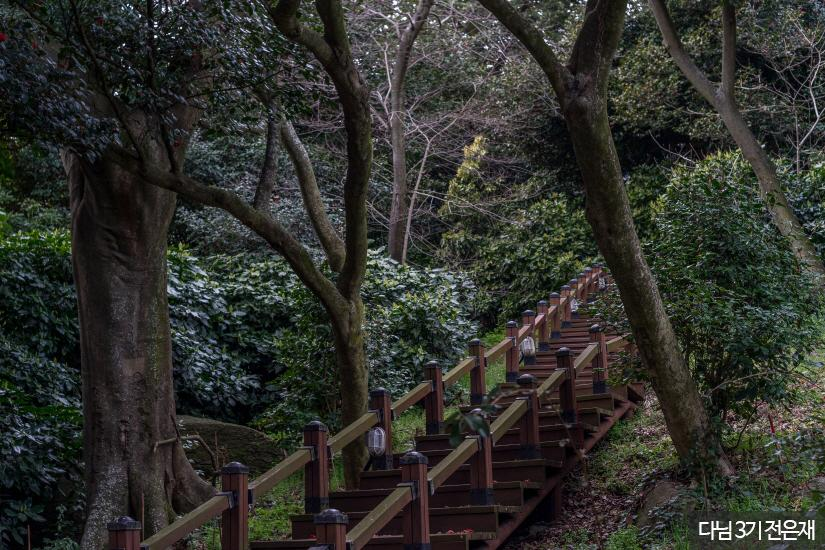 외연도 상록수림5