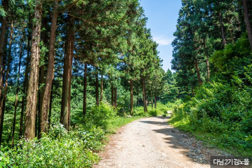 장성 축령산 편백숲