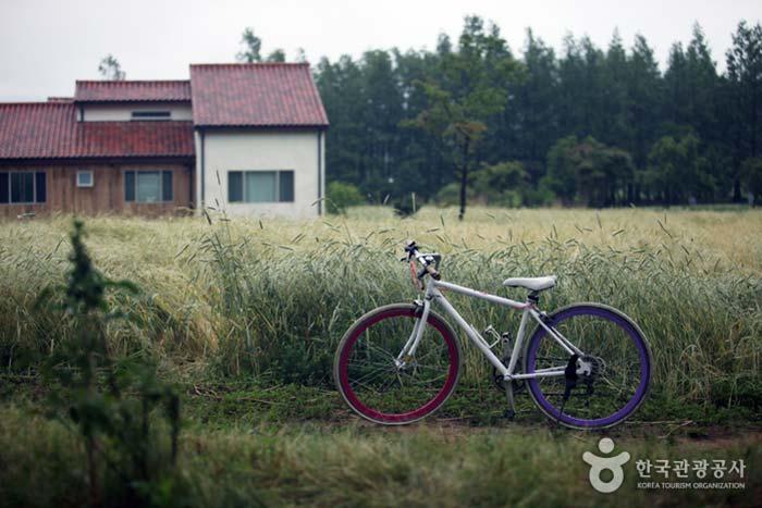 자전거 바퀴가 라벤더와 양귀비를 연상케 한다