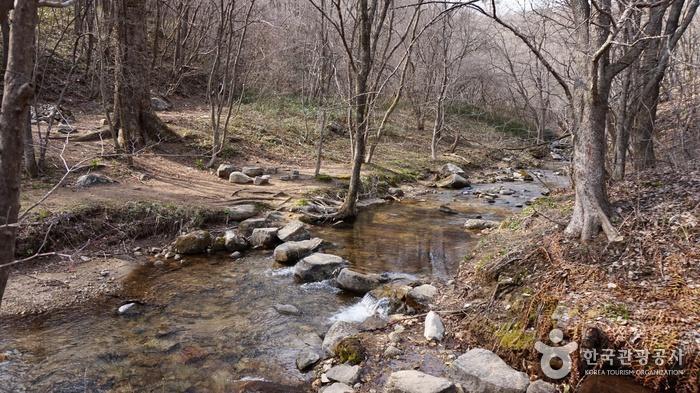 제궁골 삼거리에서는 본격적인 계곡길이 시작된다.
