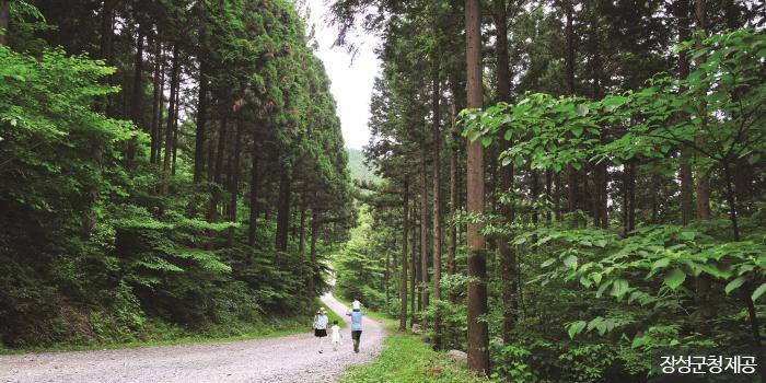 피톤치드 가득한 축령산 편백숲