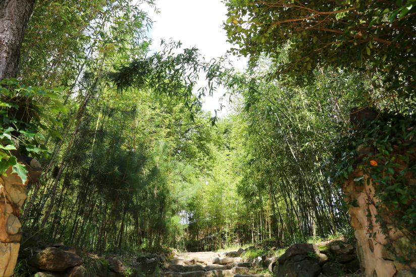 최참판댁 뒤엔 대나무숲으로 이뤄져 있어 사락사락 소리가 난다.