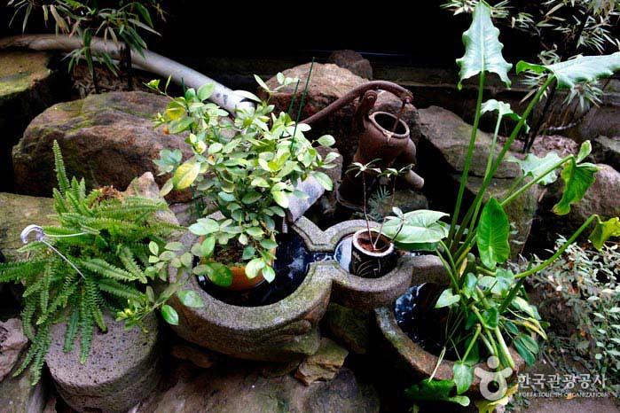 카페 구석구석 만나는 초록 식물