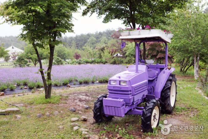 라벤더색 트랙터