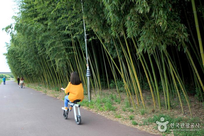 강바람 꽃바람 가르며 자전거 타기
