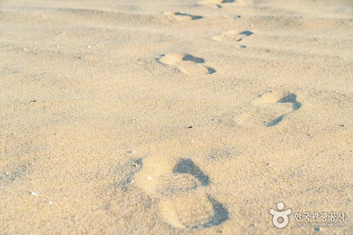 누군가의 발자국을 따라 밟으며 망상해변을 거닐었다2