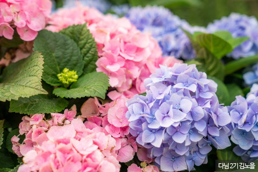 허브아일랜드에 심어져 있는 꽃