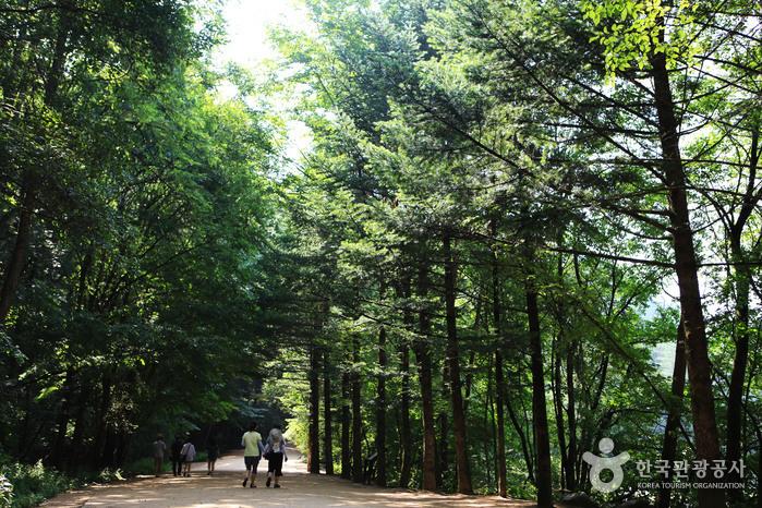 삼림욕을 즐길 수 있는 월정사 전나무숲