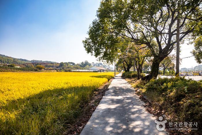 출발지점에서 얼마 지나지 않아 발길을 세우게 만드는 평화로운 전원 풍경