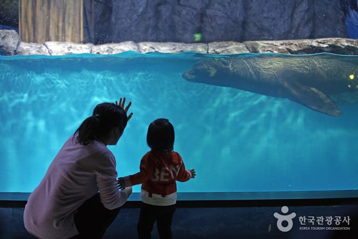 캘리포니아 바다사자를 바라보는 아이와 엄마