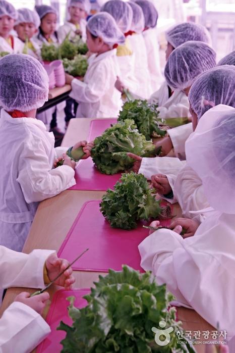 직접 수확한 채소를 다듬는 아이들