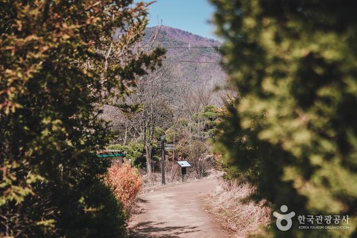 소나무숲길을 지나면 다시 탁트인 시골길이 이어진다.