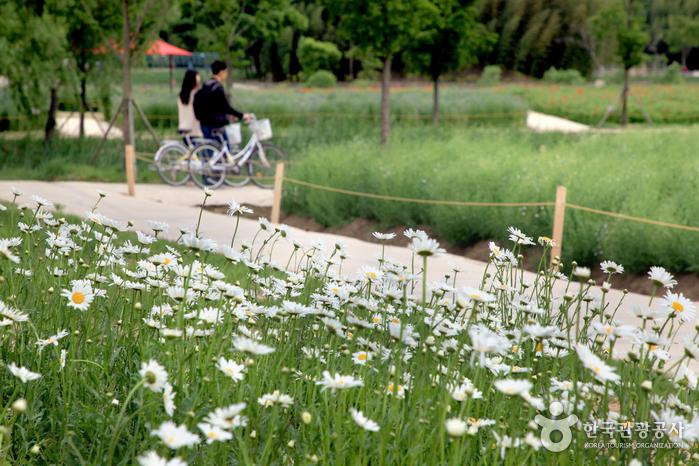 썸남썸녀가 자전거를 타며 더욱 가까워지는 시간