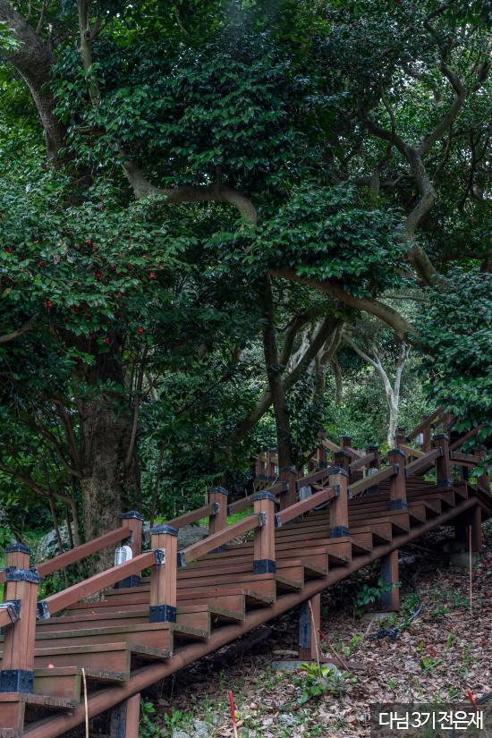 외연도 상록수림2