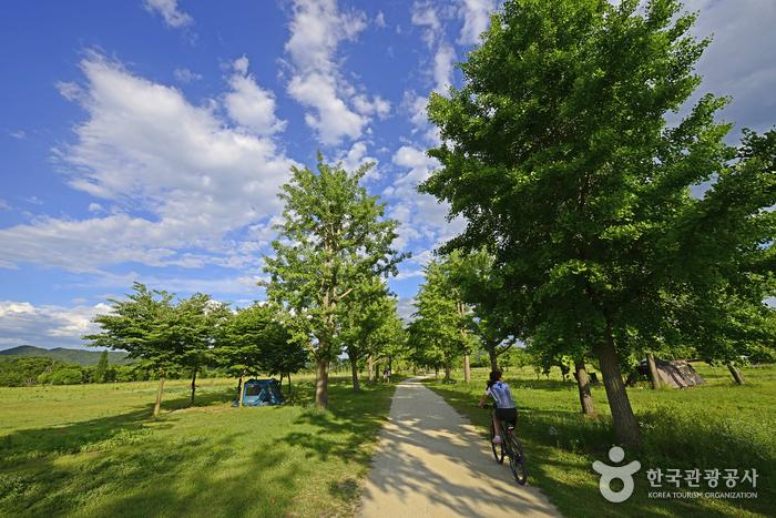 은행나무길은 산책로이자 자전거길이다.